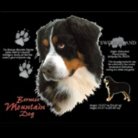 Click to order printed t-shirt 30812... Bernese Mountain Dog