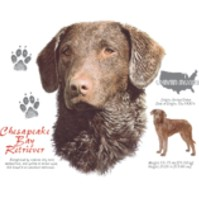 Click to order printed t-shirt 30822... Chespeake Bay Retriever