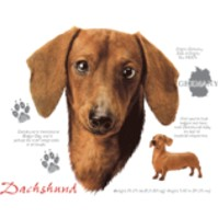 Click to order printed t-shirt 30828... Chocolate Dachshund