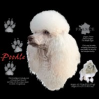 Click to order printed t-shirt 41073... Poodle