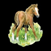 Click to order printed t-shirt y2737... Pony (Youth Size Print)